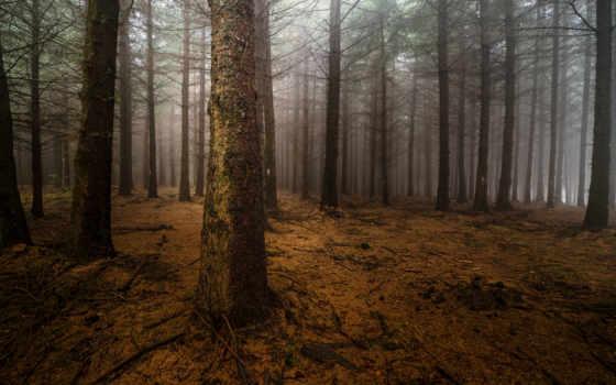 лес, туман Фон № 22470 разрешение 2560x1600