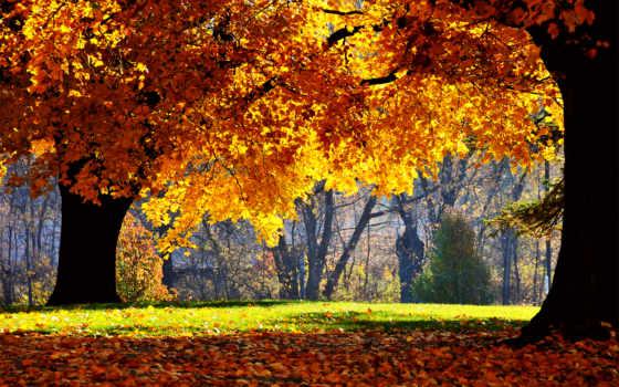 осень, можно, осени