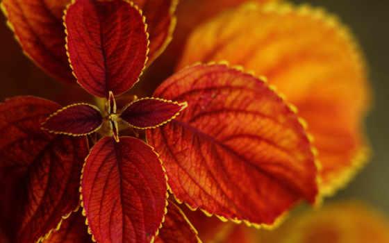 листья, bush, макро