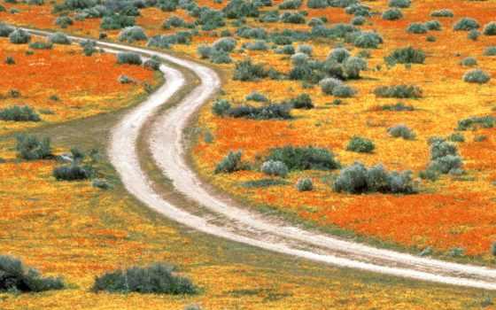 природа, antelope, долина