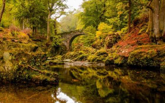 лес, мост, ireland, природа, desktop, this, tollymore, park,