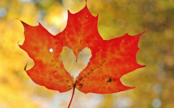 осень, лист, макро, maple, природа, сердце, трава,