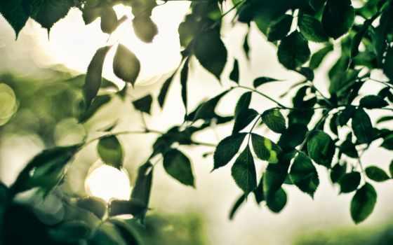 ветки, sun, листва, rays, блики, листья,