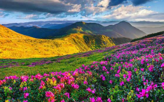 альпы, горы, луга, slovenia, природа, экрана, высоком, горах, azalea,