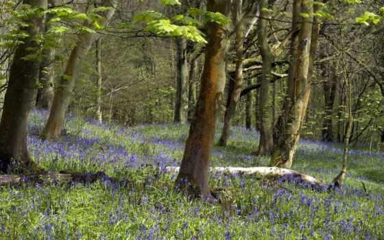 природа, cvety, лес, фоны, осень, дубки, wxga, категории, смайл, энн,
