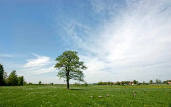 summer, птица, облако