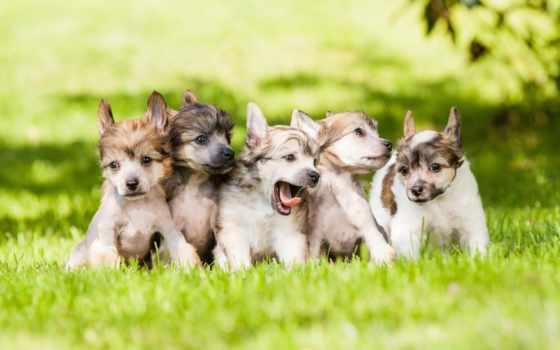 красивые, собаки, трава