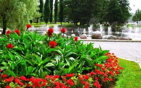 цветы, fountain, флот