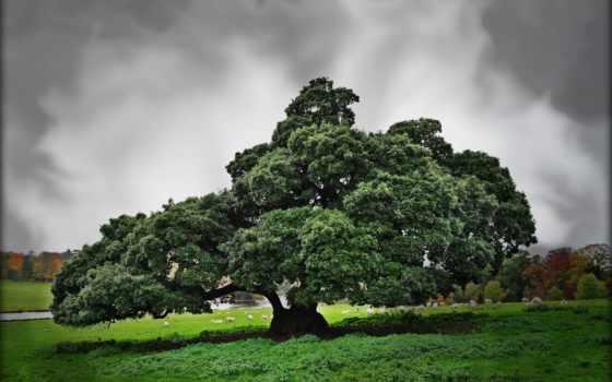 дерево, большое, деревя