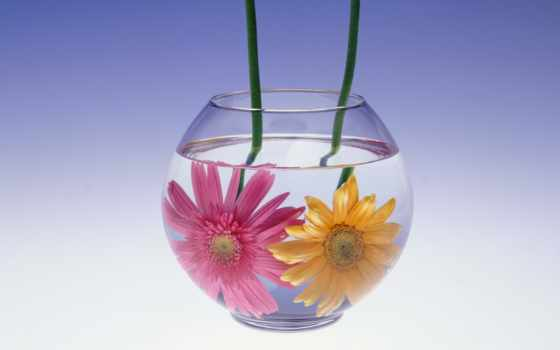 цветы, натюрморт, аквариуме, водой,