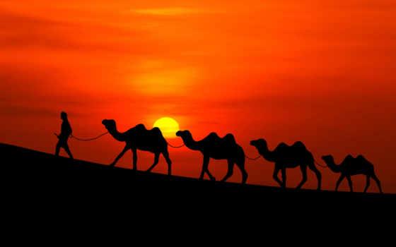 quotes, islamic, life, allah, ислам, bayan, you,