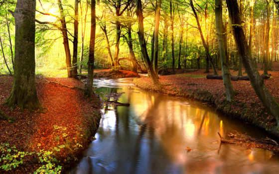 sun, trees, река, лес, листва, водопад, фотообои, озеро, природа, фотообоев, отражение,