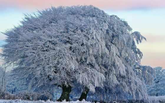 инее, trees, зимнее, дерево, последний, сегодня, белом,