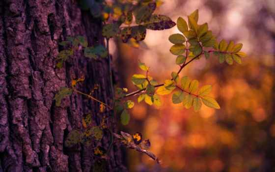 дерево, tags, растение, свет, осень, nikon, пасть, thorns, vandeputte, dane,