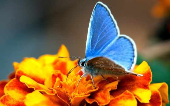 цветы, бабочки, бабочка