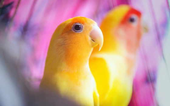 попугаи, читатели, mobilnyi
