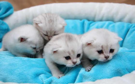 любов, коты, кошки