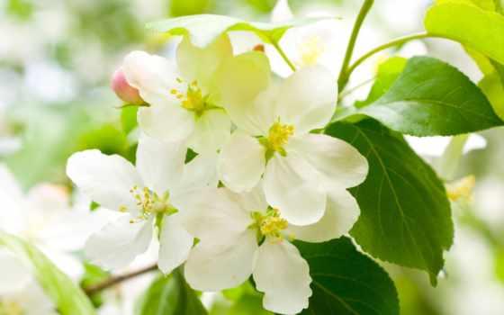 весна, цветы, картинка