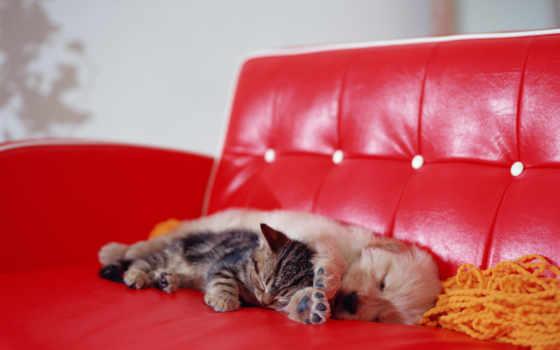 котенок, щенок, диване, спят, кот, красном, диван, спит,