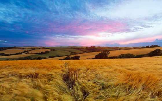 поле, landscape, summer