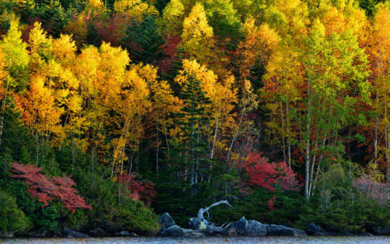 лес, осень, trees, desktop, widescreen, colourful,