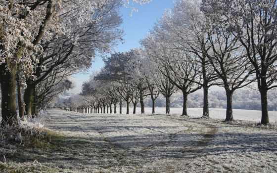 winter, duvar, trees, природа, kağıtları, masaüstü, аллея, definition, high,