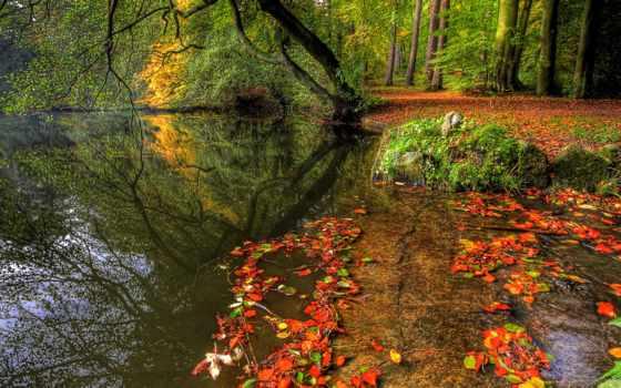 природа, осень, страница, лес, trees, water, rivers,