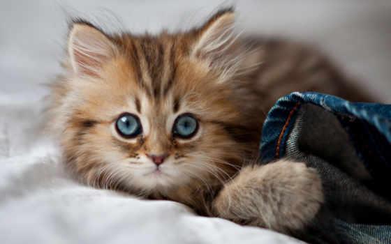 мире, самый, котенок, bbc, мнению, красивый, that, несмотря, живет, милых, огромное,