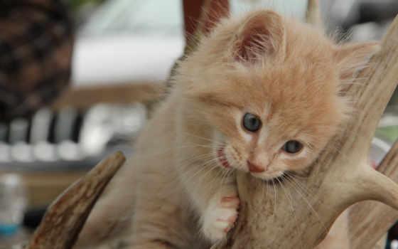 кошки, zhivotnye, pixwords, коты, котята, широкоформатные, zoom, картинку,