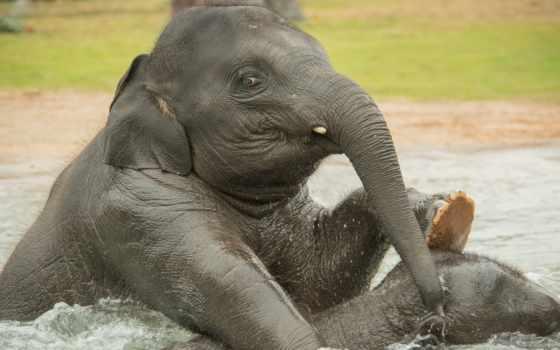 high, слон, definition