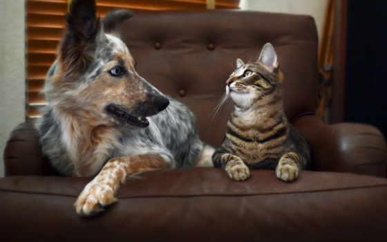 кот, собака, animal, форсаж, stare, лапа, glance