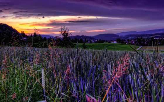 поле, закат, небо