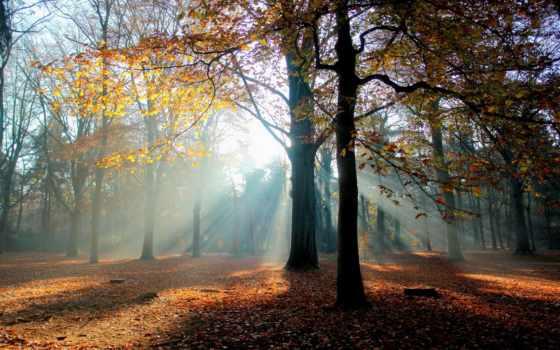 , svet, holland, осень, лучи, восход