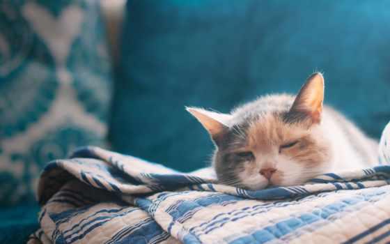 кровать, кот, sleeping, лист, pictures, love,