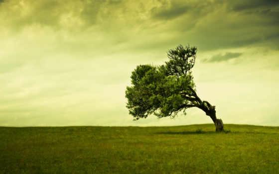 дружелюбный, eco, природа, зелёный, компьютер, изображение, basile,