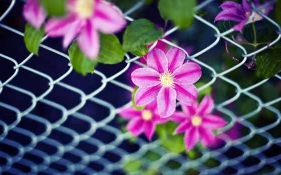 cvety, широкоформатные, широкоэкранные, розовый, листва, цветочек, цветочки,