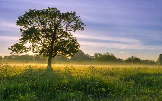 sun, trees, дерево, сзади, природа, свет, первую,