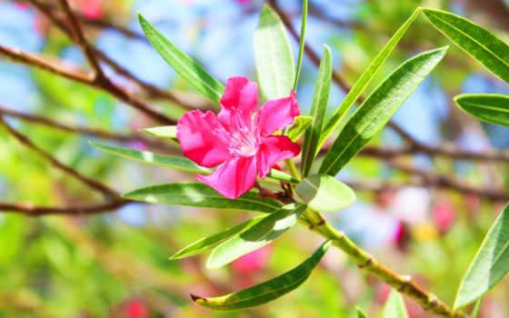 covers, facebook, timeline, kwiat, fb, kwiaty, zdjęcia, розовый, орхидея, природа,