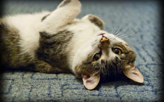 кот, upside, down, картинка, снег, ложь, striped,