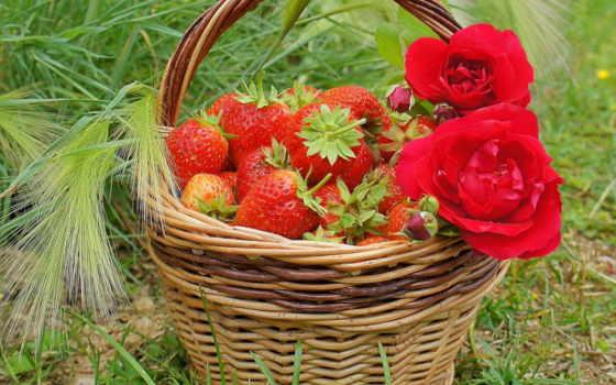 ягода, клубника, summer, день, роза, после, сладкое, еда, initial