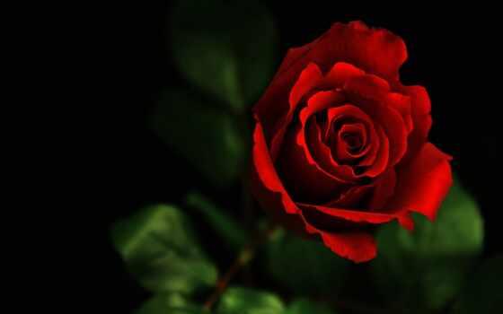 взлёт, день, red, happy, роза, love, valentine