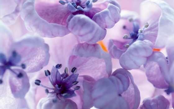 wallpapers, обоев, wallpaper, цветы, скачать, and, purple, hq, сборник, flowers, необычные, close, красиво, прекрасных, цветами, lilac, affresco,