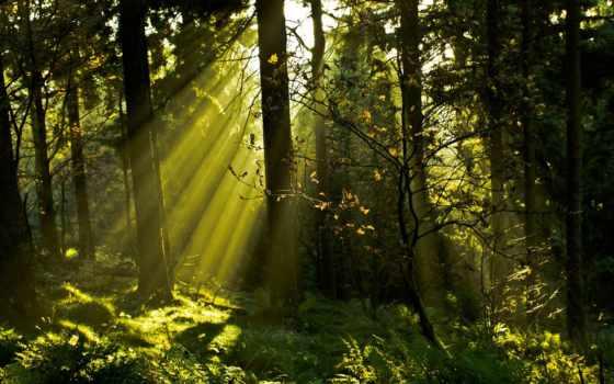 trees, лес, природа