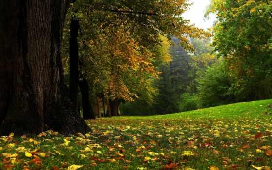 пейзажи -, осень, лесные, обоях, природы, new, collector, красивыми, украшения, пейзажами,