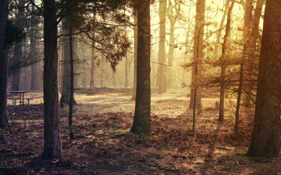 лес, full, trees