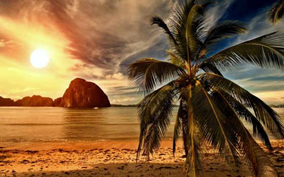 пляж, море, пальмы, закат, природа, берег, фотообои, landscape, palm,