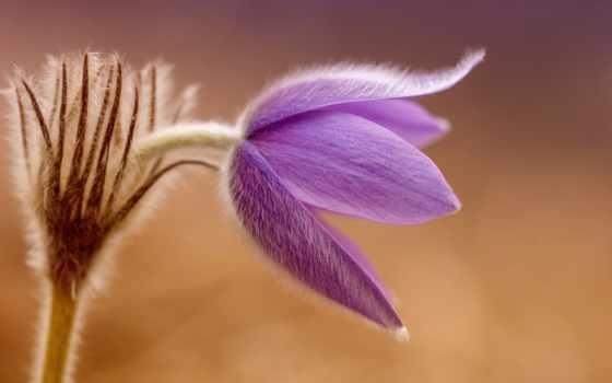 life, telugu, cvety, fotografía,