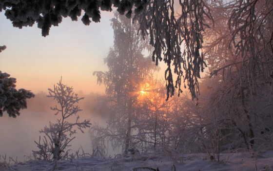 winter, снег, taiga, утро, дерево, закат, палуба, permission, hunting, siberian, лес