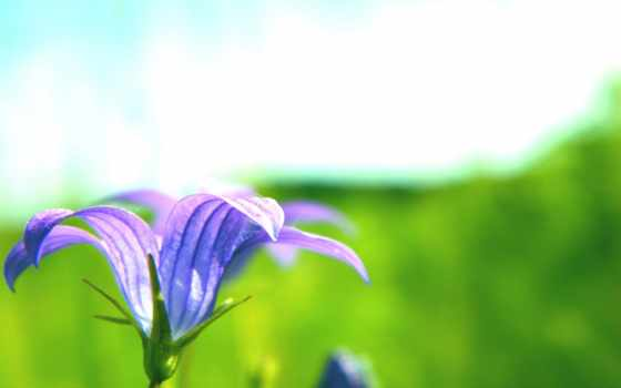цветок, лето