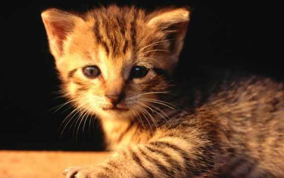 мордочка, котенок